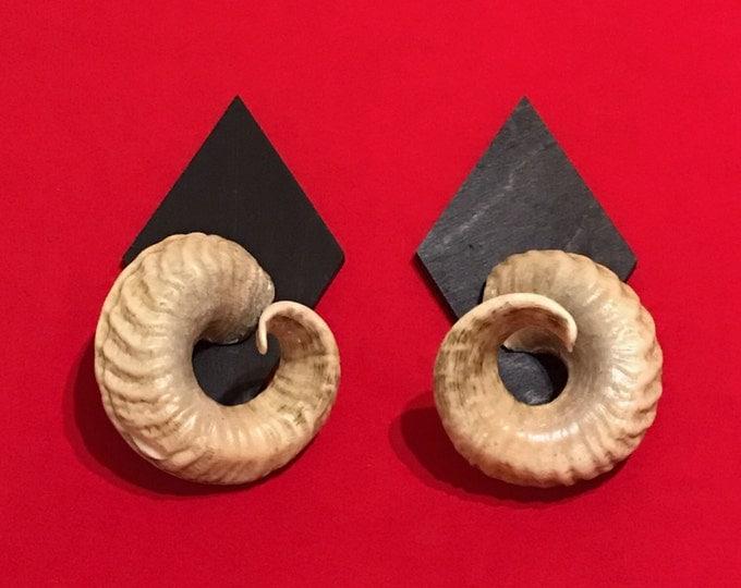 Real ram horns on medallions