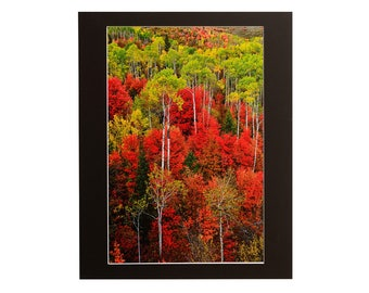 Idaho Autumn Matted Fine Art Giclee Print, Modern Wall Art Featuring Fine Art Nature Photography For Any Home Or Office Decor