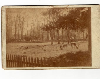 Cabinet card if group if deer