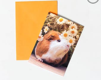 Guinea pig Archie Daisies Flowers Greeting Card