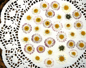 Dried pressed flowers, real dried English daisy flowers 30 pcs.