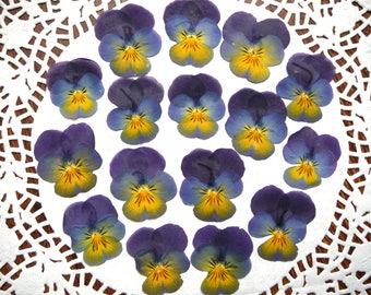 Dried pressed violas, dried blue pansies 15 pcs.