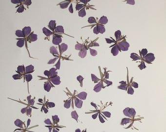 Dried Pressed Flowers, Purple Pressed Flowers,  Real Dried Pressed Flowers, Pressed Flowers for Craft