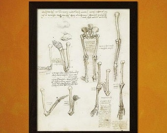 Da Vinci Anatomical Medical Decor Anatomy Poster Science Skeleton Poster Educational Retro Medical Buy