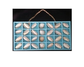Coastal Decor Shells Blue Shadowbox Wall Hanging