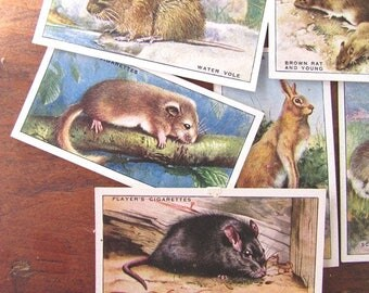 Cigarette Cards Animals Paper Ephemera Cards Vintage Players Cigarettes Antique Trading Cards