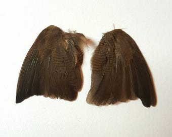 Real stuffed bird wings curiosity tropical feathers mounted taxidermy Brown