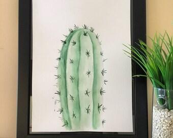 Cereus validus - Cactus