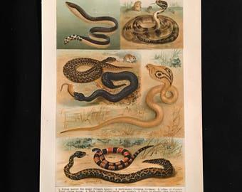 Venomous Snakes - Original Vintage Print,  Antique Color Lithograph, Natural History Print