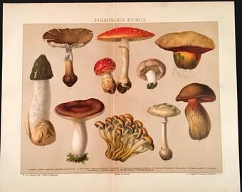 Poisonous Fungi - Original Vintage Print,  Antique Color Lithograph, Natural History Print