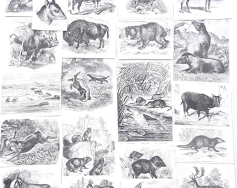 Antique Paper Ephemera Pack of Mammals 1890s - Art Journal Supply, Junk Journal Supplies, Collage, Victorian Natural History, Bison, Hare