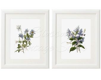 Botanical Prints, Vintage Blue Flowers Botanical Prints INSTANT DOWNLOAD Digital Images for Print 5x7, 8x10, 11x14 Included - 2046