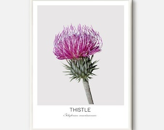 Thistle Print, Thistle Flower Print, Plant Photography, Thistle Decor, Minimal Art, Plant Wall Art, Minimalist Flower, Scandinavian Prints
