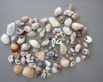 Shells small batch 90 collection supplies decoration accessories decor beach sea ocean bulk jewelry crafts mosaics paintings activities arts