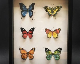 painted butterflies and cuts + frame
