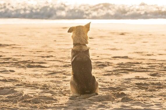 WAITING. Dog Portrait, Animal Print, Photographic Print, C Type Print, Beach Picture
