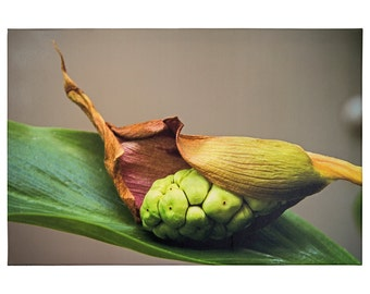 Color-intensive photo image on canvas, Calla - available in various sizes!