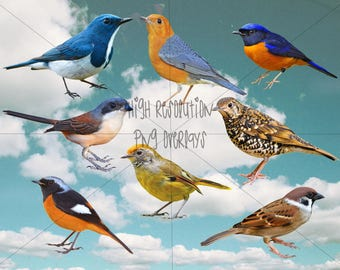 Small birds stock overlay pack of 8 for photoshop