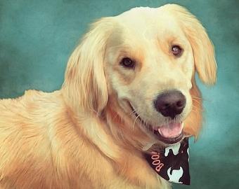 Golden Retriever Portrait, Custom Dog Portrait, Digital Pet Painting, Free Shipping!