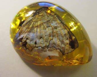 """Resin Teardrop Pendant of Real Butterfly-Moth, 2 1/8"""""""