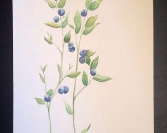 Blueberry branch - Botanical Illustration, Original painting