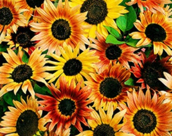 10 Mixed color sunflower seeds