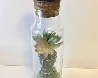 Succulents in a Bottle, Upcycled