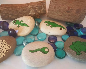 Life cycle of a frog stones, science, story stones