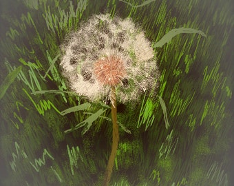 Jpeg Digital Print of A Dandelion / Digital Art of A Dandelion / Jpeg Digital Print of A Dandelion / Digital Download of A Dandelion
