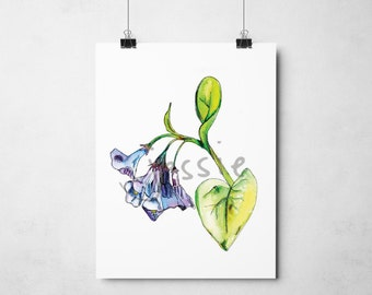 Original Print: Bluebells