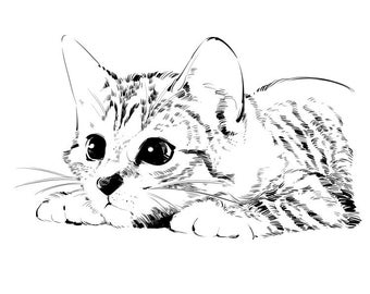 Custom cat portrait in black and white. Cat memorial and gift. Pet memorial and caricature. Pet line art drawing. Pet lover, pet loss gift.