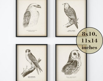 Vintage bird print set, Eagle print, Falcon print, Owl print, Antique bird illustrations, Instant download prints, Art prints 8x10, 11x14
