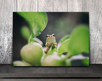 Frog print,Frog fine art photography,Frog fine art print,Frog art,oriental,photography,art print,photo,picture,wall art,artwork,print,décor