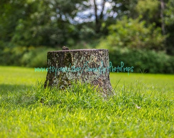 Tree Stump - 3 Instant Download Digital Backdrop photography