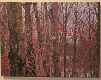 Red Berries - 3