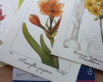 4- Botanical flowers watercolor, original painting, drawing botanicals Watercolorist, painted and hand drawn
