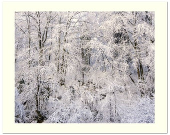 "20x16"" Travel Photography Nature Art Print, Large Wall Art Snow Branches Limited Edition Photograph"