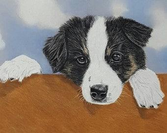 Pastel portrait of a Border Collie pup