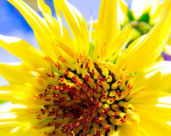 Colorful Sunflower Photo Print on Canvas