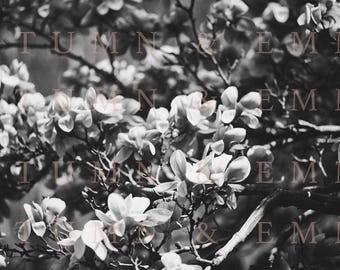Black and White Floral Photography Digital Download - 1 image