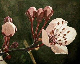 Cherry Blossoms - Colored Pencil Art