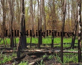 Forest Floor, Instant Download