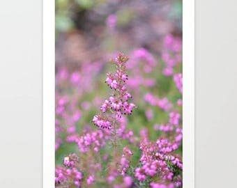 Floral Photograph, floral print, Pink Flowers, Nature Photography, Wall Art Decor, fine art prints, Spring photo, nature photo, pink decor