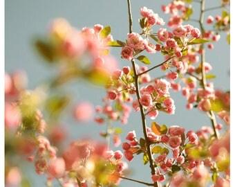 Flower Photograph - Nature Photography - Pink Art - Sherbet Sky - Spring Art- Cherry Blossom Art Print - Fine Art Photograph - Floral Art
