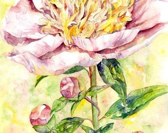Watercolor Single Pink Peony Original Painting, Peonies, Peony Decor, Peony Lovers