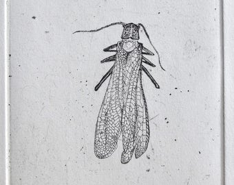 Original Salmonfly Etching