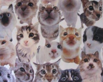 "Cat fleece -- kitty, kitties, cats, kitten, OMG, cute -- fuzzy, soft, photo print -- 25"" x 50"" remnant"