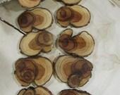 10 Stunning Juniper Tree Slices ~  tree cookies, wood slices, wood discs (WS70010)