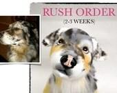 Custom Stuffed Animal RUSH 2-3 weeks - Pet Lover Gifts - Dog Gift - Cat Gift - Pet Replica - Plush Pet Portrait