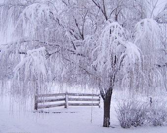 DTO - Winter's Morning Whisper